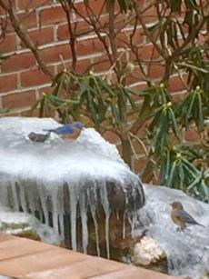 Blue birds on a custom bubbling rock fountain by Kingdom Landscaping