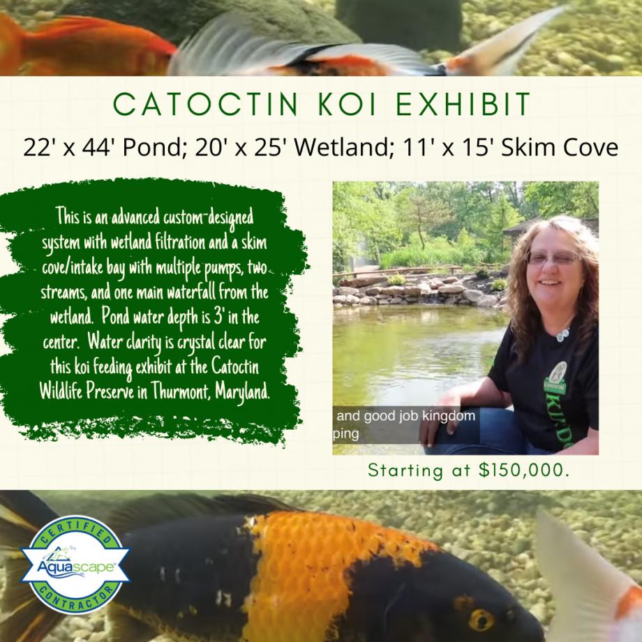 Kingdom Landscaping Catoctin Wildlife Preserve Koi Exhibit Pond Thurmont Maryland
