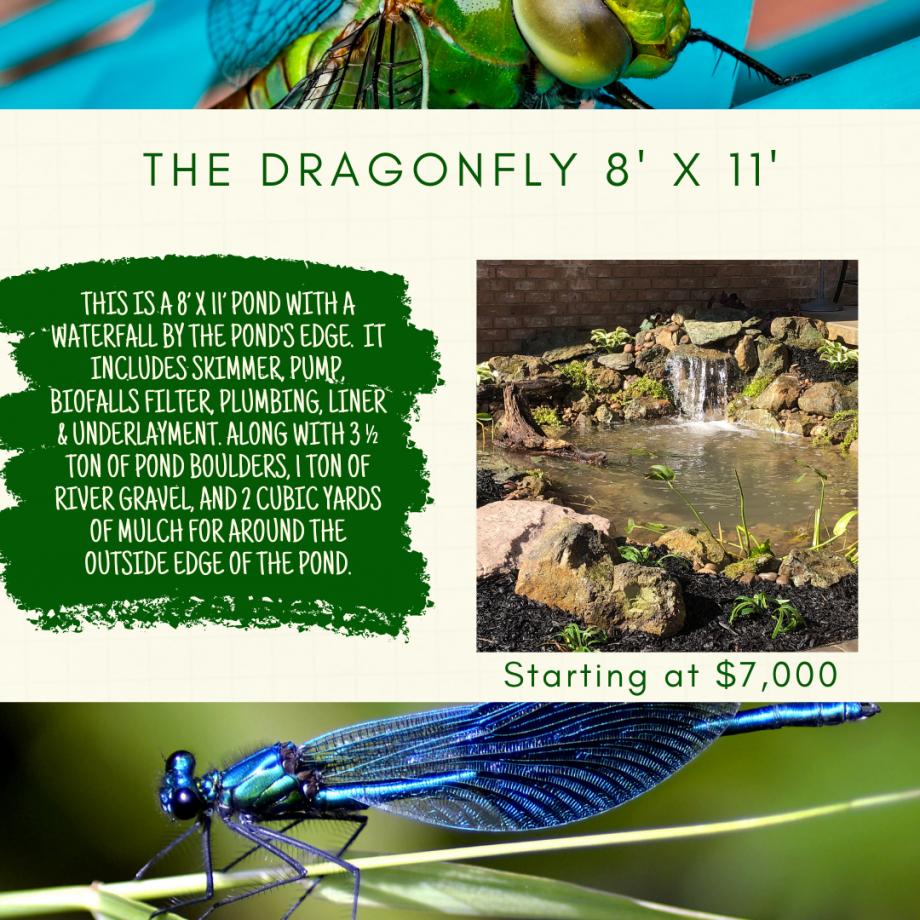 Kingdom Landscaping Pond Builder The Dragonfly Aquascape Ecosystem Pond