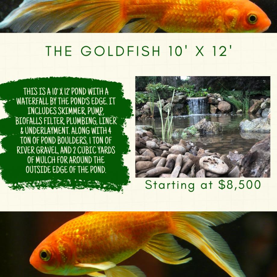 Kingdom Landscaping Pond Builder The Goldfish Aquascape Ecosystem Pond