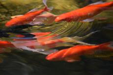 How to Care for Fish
