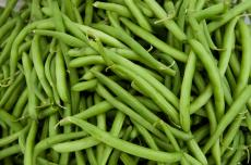 when to plant green beans