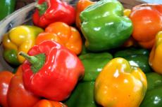when to plant peppers