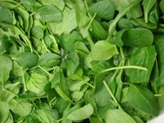 when to plant spinach