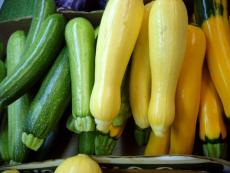 when to plant squash
